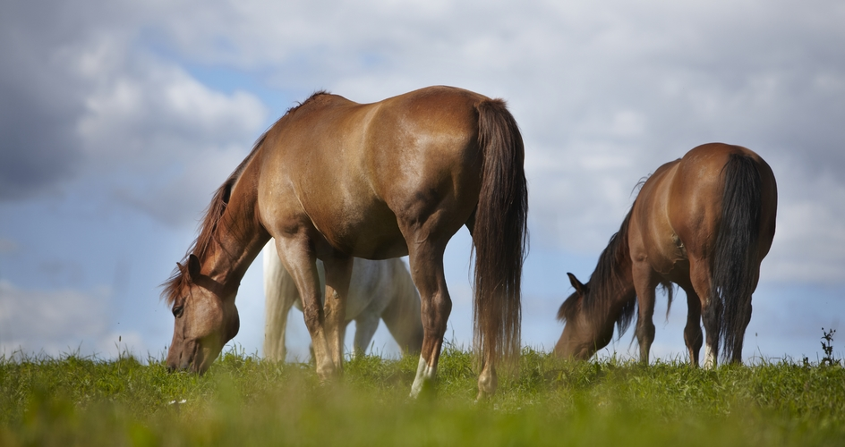 Nutrient management of horse paddocks
