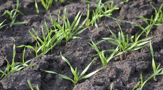 Agronomische Grundsätze