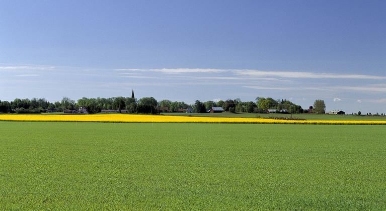 Jordbrukslandskap med rapsfält i bakgrunden