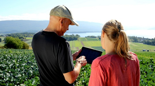 Man and woman looking at an iPad in a field