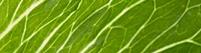YaraVita leaf