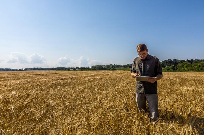 Man i kornfält