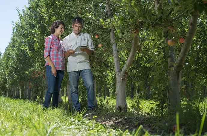 Almatermésűek terméshozamának növelése
