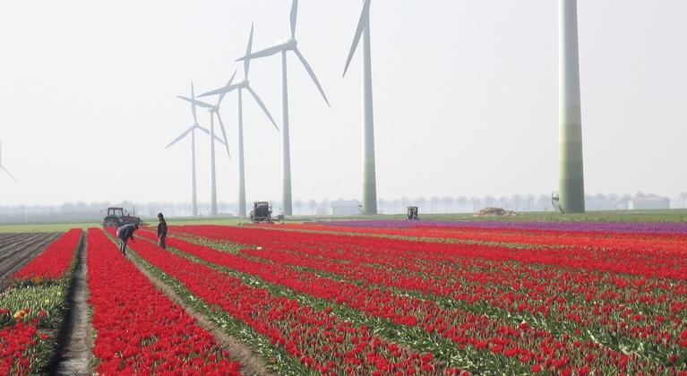 Yara Nederland