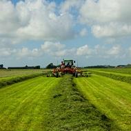 El efecto de los oligoelementos en la calidad de las praderas