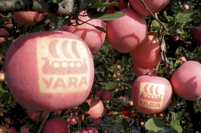 如何提高苹果产量