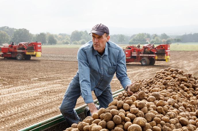 Creşterea randamentului la cartofi