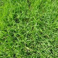 Gjødsling til gras gjødslingsmatrise