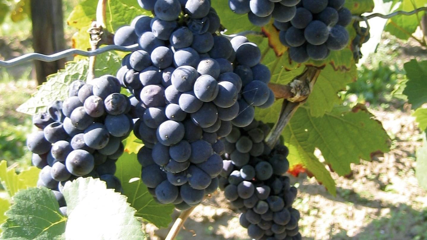 programmes de nutrition pour la vigne