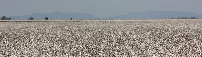 Yara in Australia - cotton harversting
