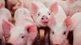 Katso lannoitusohjeet sianlannan täydentämiseen