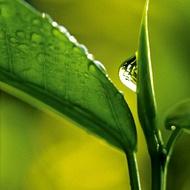 A vízfelhasználás hatékonyságának fokozása paradicsom termesztésekor