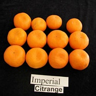 Citrus Fruit Size