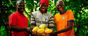 Ivory Coast farmers