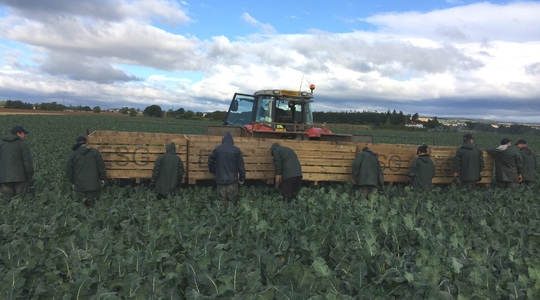 Correct nutrition protects Brassica quality