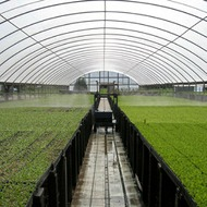 Co2 for Greenhouses
