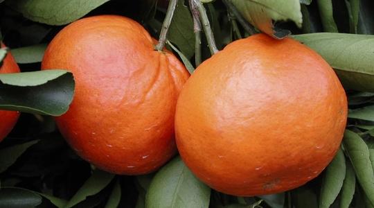 氮在柑橘类果树生产上的作用