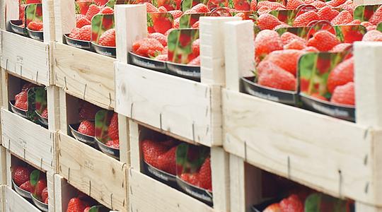 How to extend strawberry shelf life