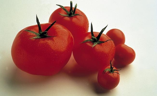Calidad tomate