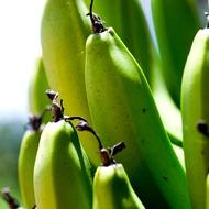 Micronutrients in Banana