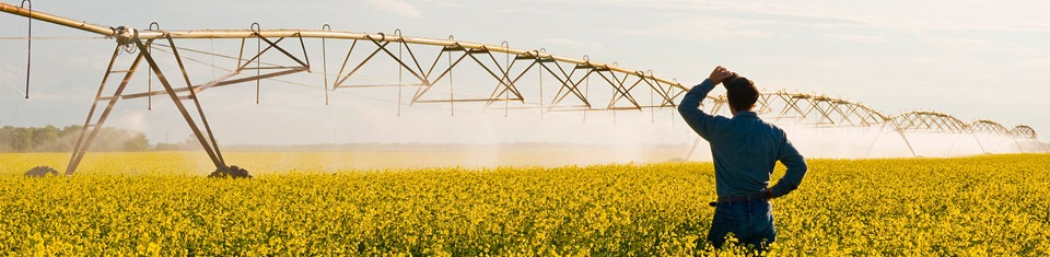 Irrigation of Oil Seed Rape / Canola