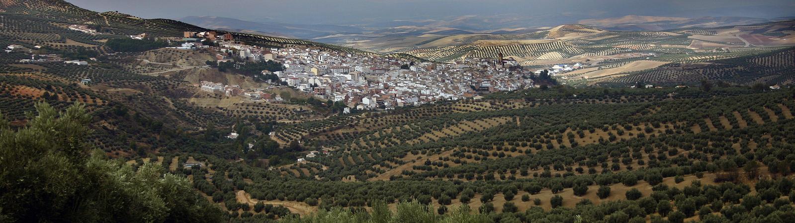 Programas de fertilización del olivo