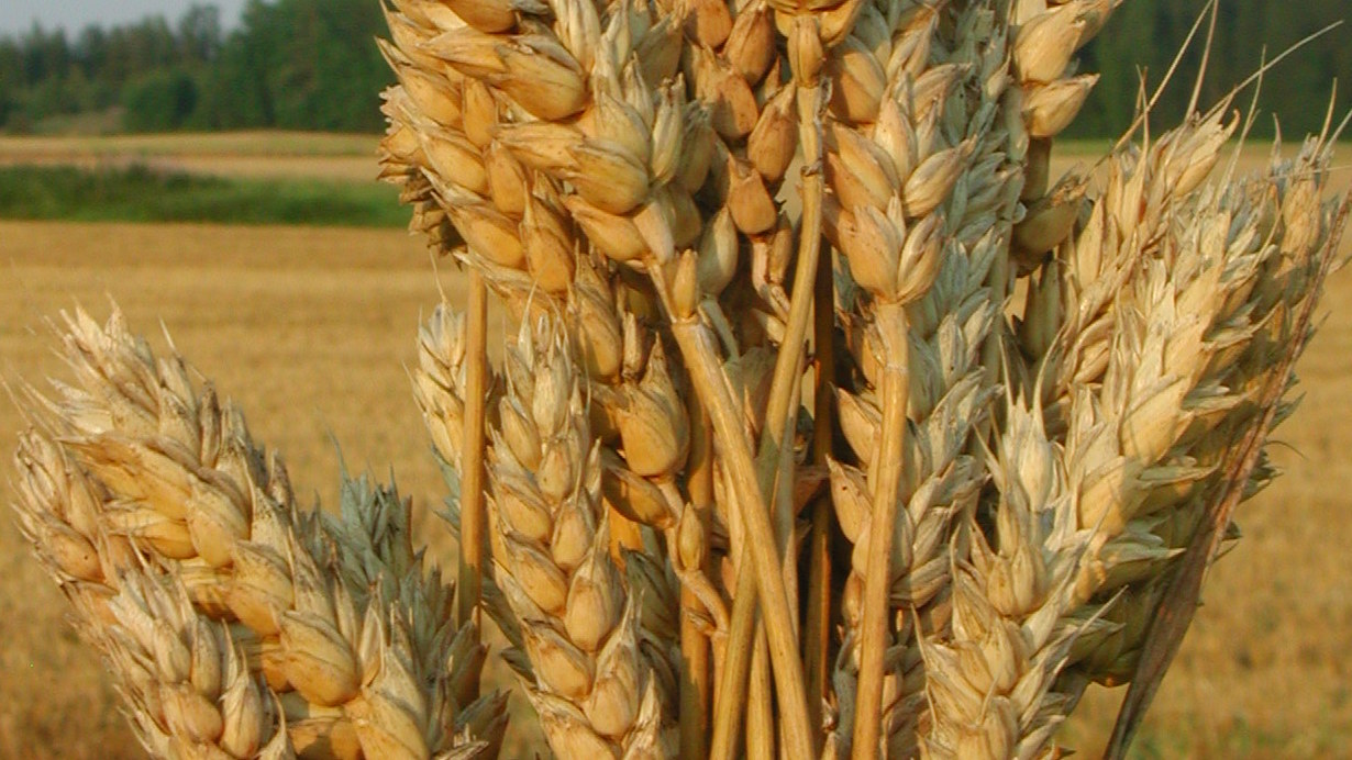 Wheat crop nutrition programs