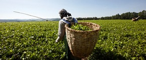smallholder farmer in Africa