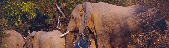 Yara South Africa