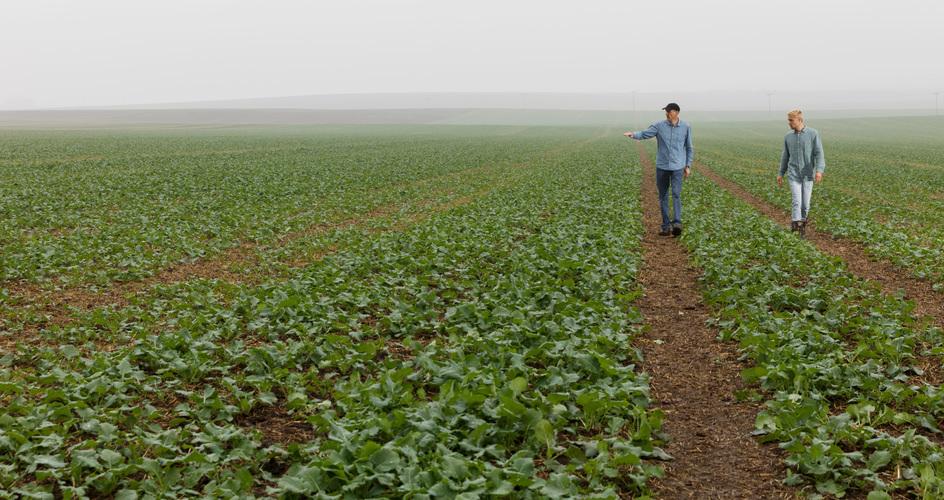 Autumn micronutrients improve oilseed establishment