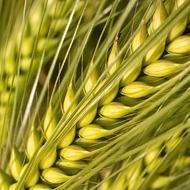 Barley Crop Programmes