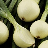 Onion Crop  Nutrition