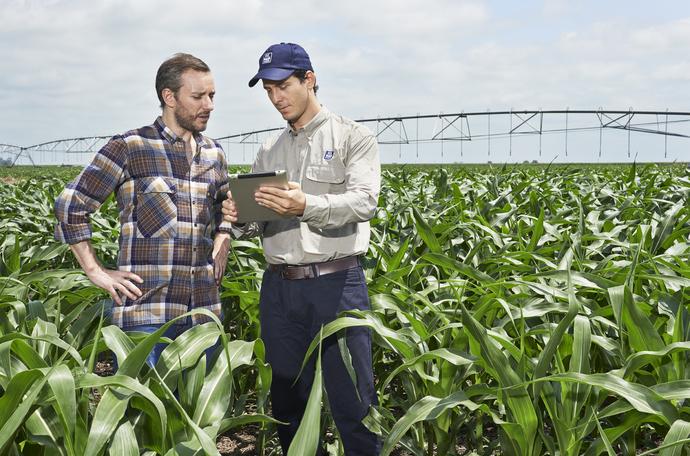 A kukorica terméshozamának növelése