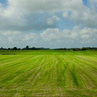Efecto del potasio en calidad de las praderas