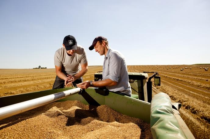 Повышение урожайности пшеницы