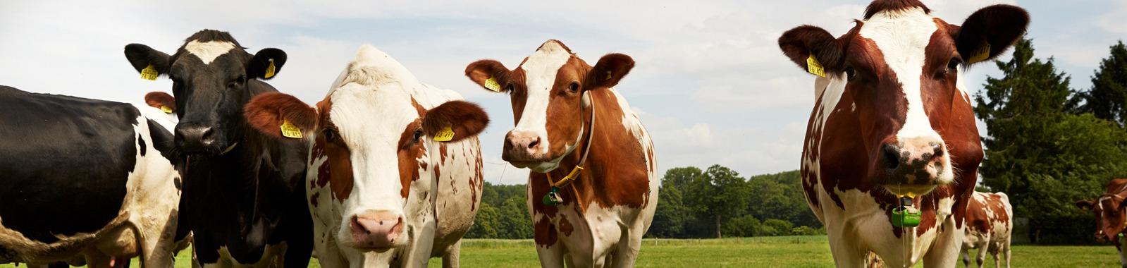 Eläimille fosfori on elintärkeä ravinne
