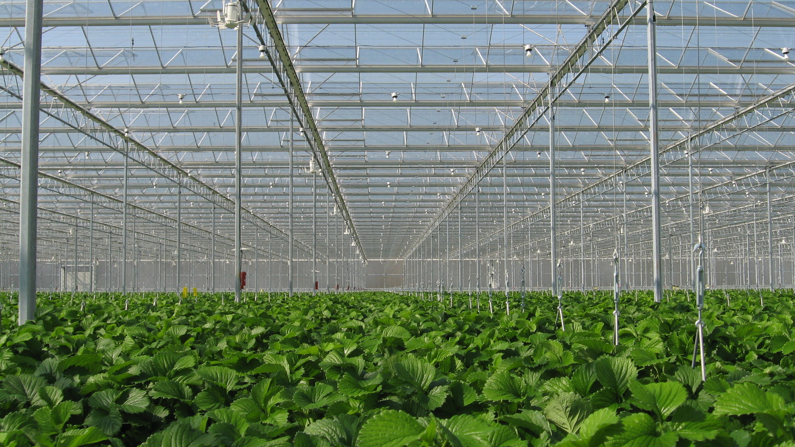 YaraTera glastuinbouwmeststoffen