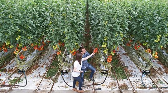 Sanidad vegetal