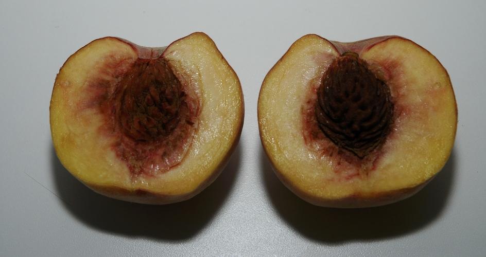 Mejorando la coloración de los frutos de hueso