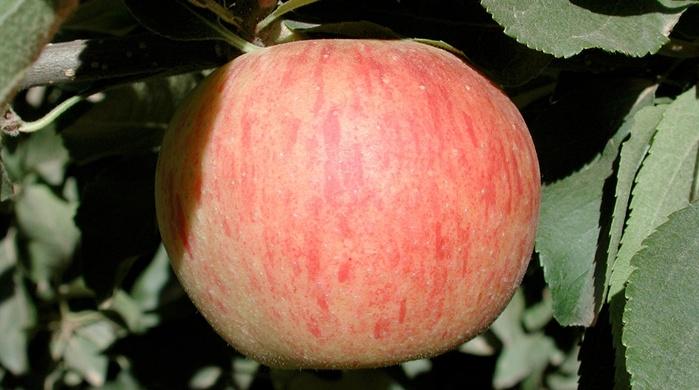 Top Fruit Market Requirements Yara
