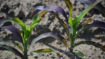 IMAGE phosphorus purple