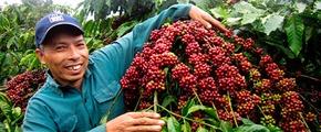 Farmer in Vietnam