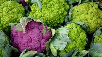 Brassica Quality