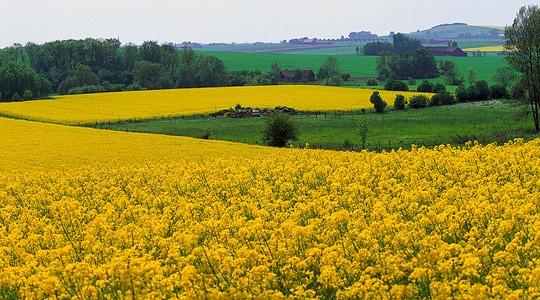 Oilseed rape crop nutrition programmes