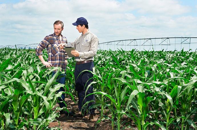 Come influenzare la qualità del mais