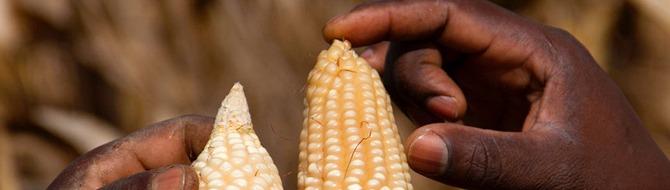 Feeding Tanzania's future population
