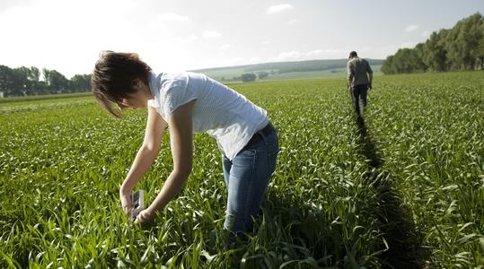 Onze kennis van tarwe