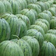 Melon Health