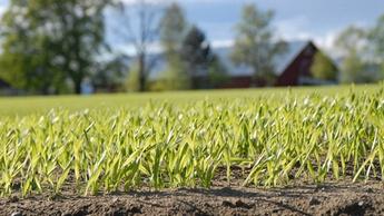 Økt norsk kornproduksjon temaark
