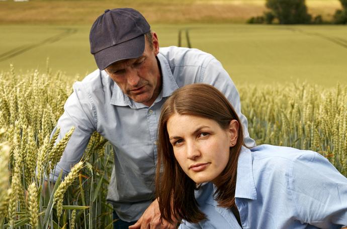 ¿Cómo incrementar el rendimiento en trigo?